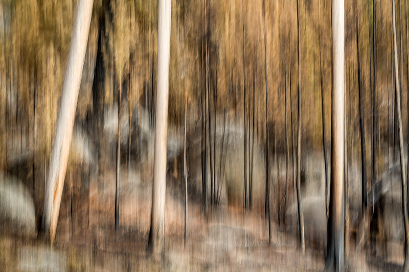 Study In Abstract No. 17, Yellowstone NP