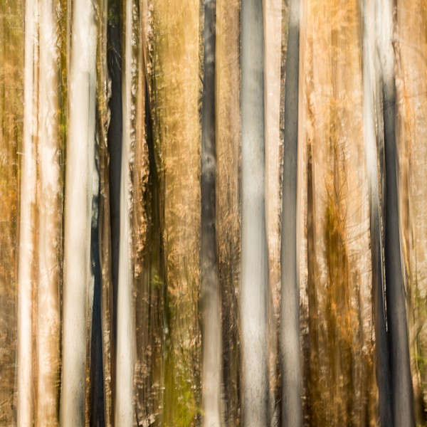 Study In Abstract No. 276, Yellowstone NP
