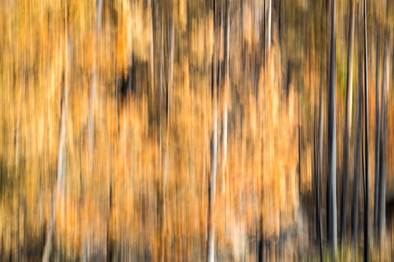 Study In Abstract No. 18, Yellowstone NP