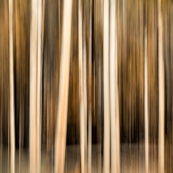 Study In Abstract No. 280, Yellowstone NP