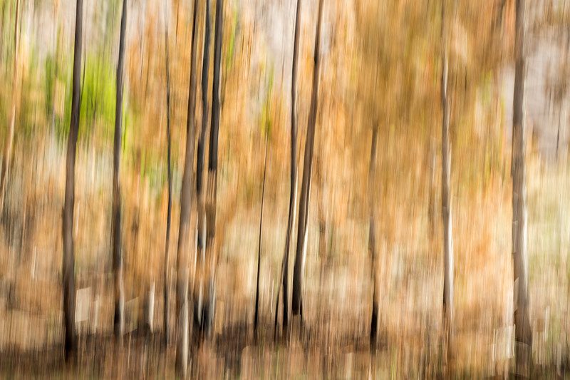 Study In Abstract No. 5, Yellowstone NP