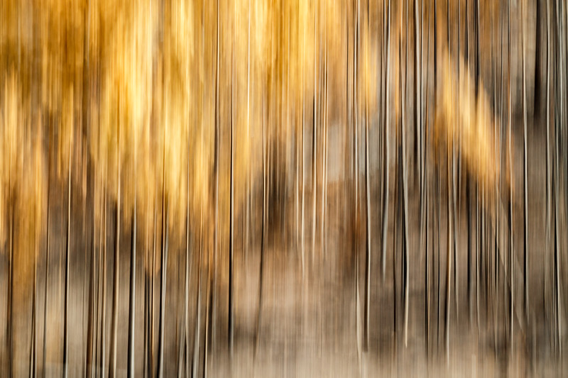 Study In Abstract No. 7, Yellowstone NP
