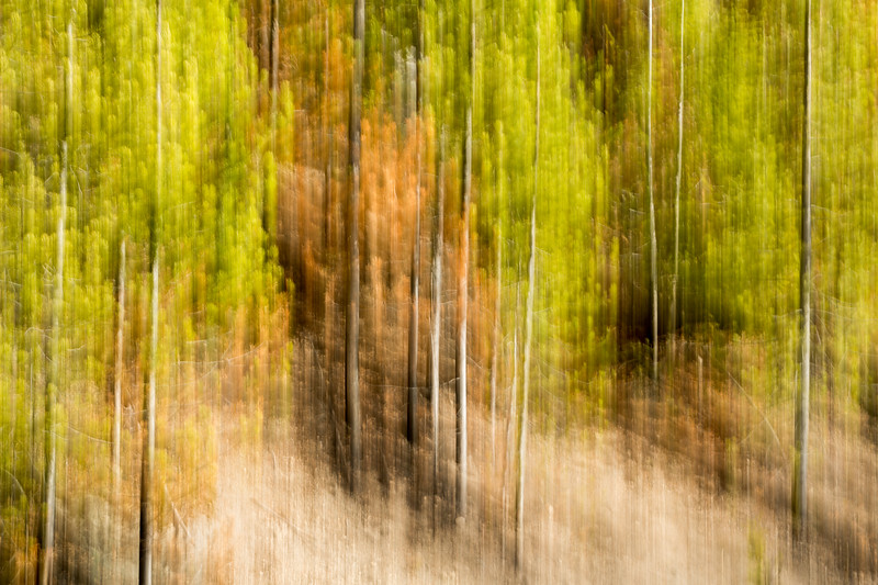 Study In Abstract No. 248, Yellowstone NP