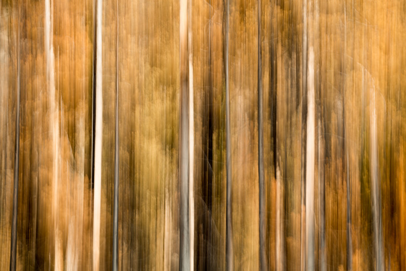Study In Abstract No. 266, Yellowstone NP