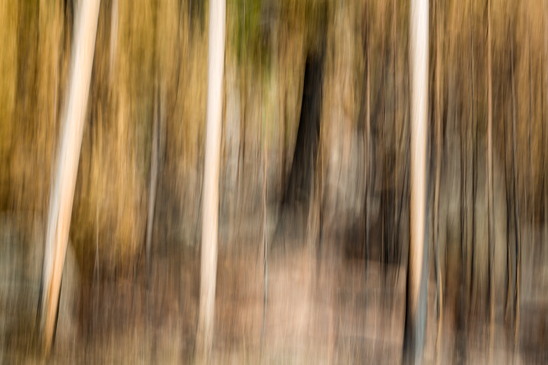 Study In Abstract No. 237, Yellowstone NP