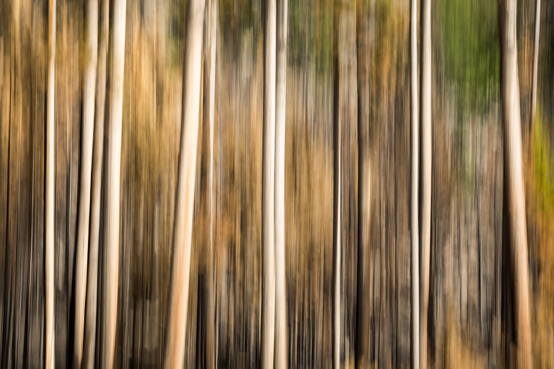 Study In Abstract No. 241, Yellowstone NP