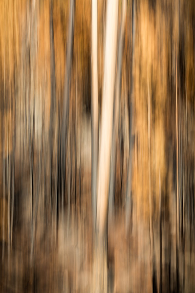 Study In Abstract No. 260, Yellowstone NP