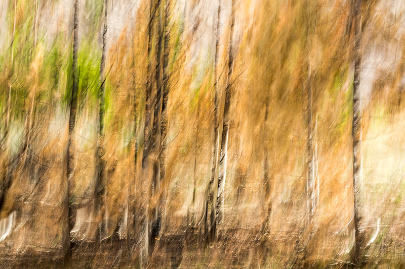 Study In Abstract No. 4, Yellowstone NP
