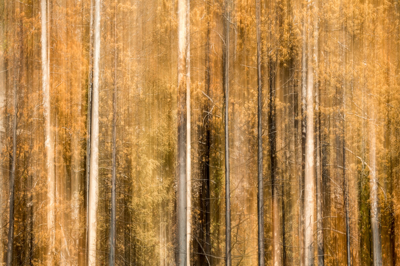 Study In Abstract No. 265, Yellowstone NP