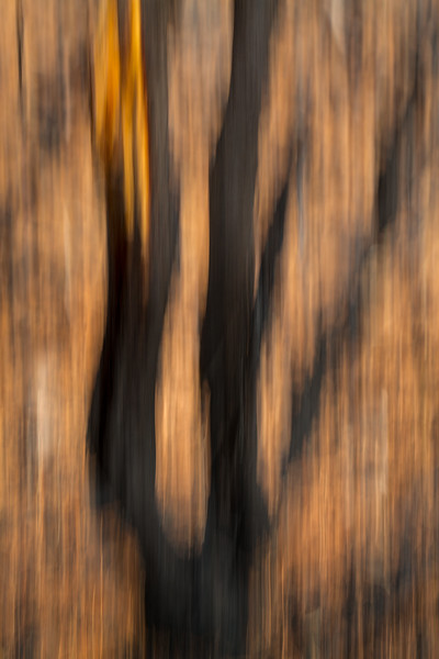 Study In Abstract No. 3, Yellowstone NP