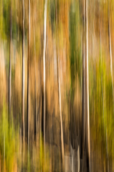 Study In Abstract No. 20, Yellowstone NP
