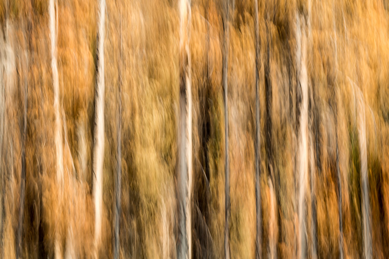 Study In Abstract No. 264, Yellowstone NP