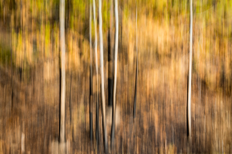 Study In Abstract No. 13, Yellowstone NP