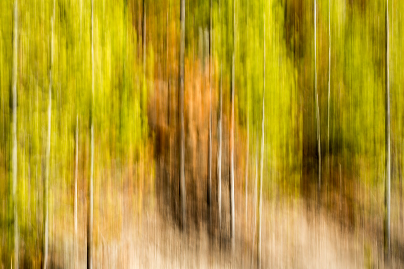 Study In Abstract No. 246, Yellowstone NP
