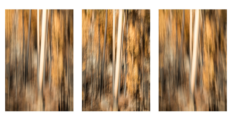 Study In Abstract Nos. 260, 261, 262, YNP (Composite)
