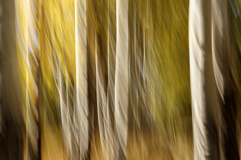 Study In Abstract No. 1, Yellowstone NP