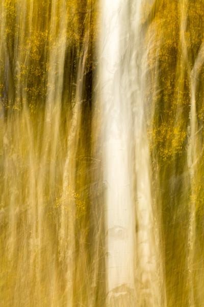 Study In Abstract No. 59, Yellowstone NP