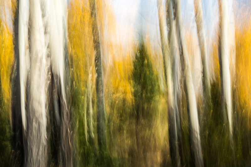 Study In Abstract No. 196, Yellowstone NP