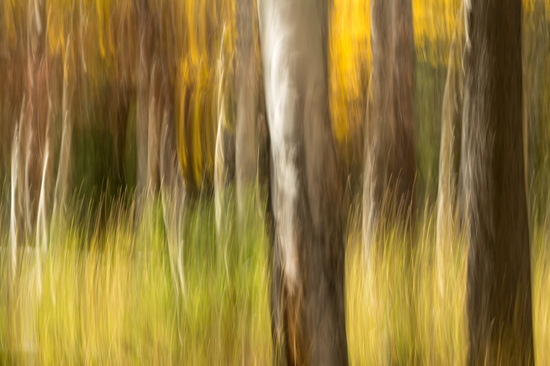 Study In Abstract No. 100, Yellowstone NP