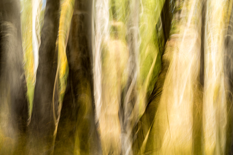 Study In Abstract No. 63, Yellowstone NP