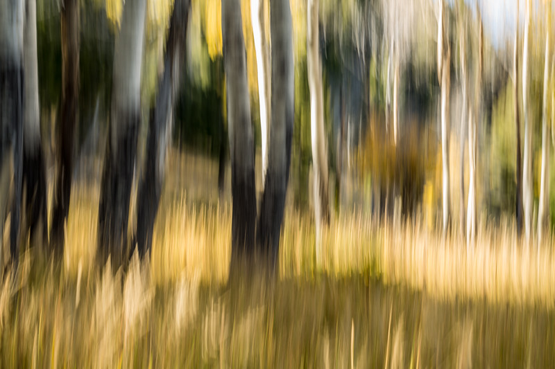 Study In Abstract No. 373, Yellowstone NP