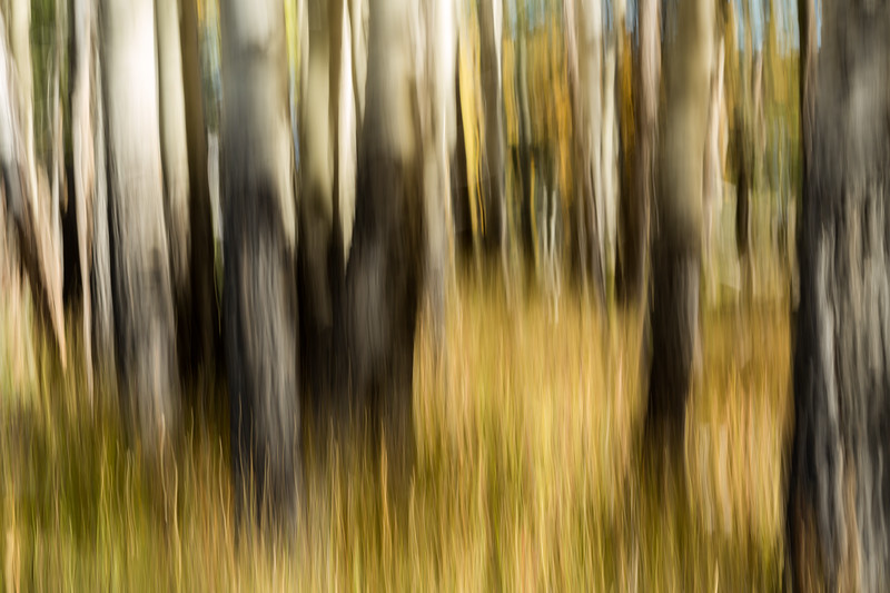 Study In Abstract No. 72, Yellowstone NP