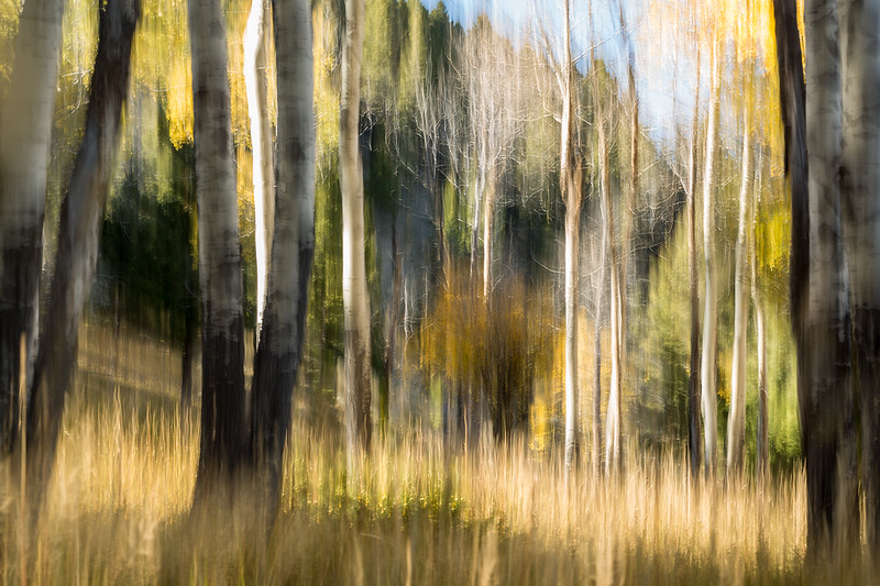 Study In Abstract No. 374, Yellowstone NP