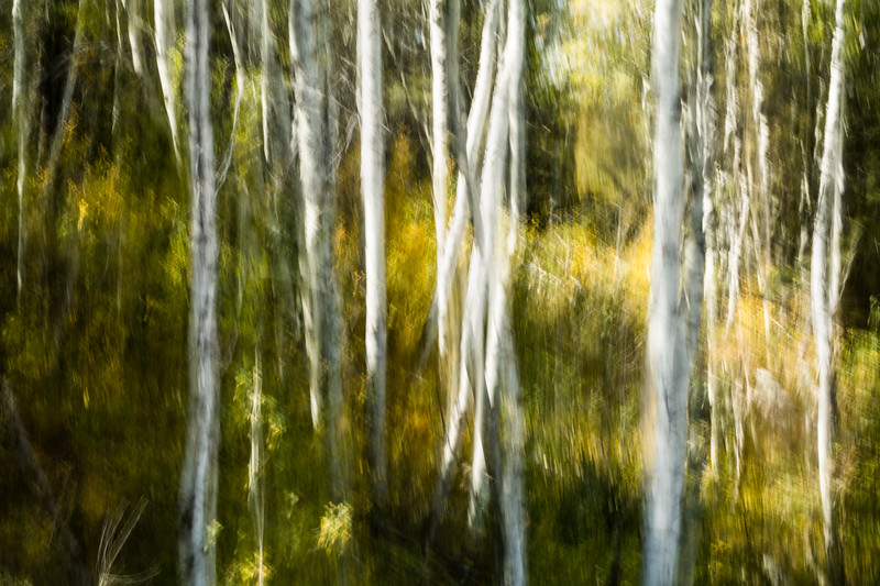 Study In Abstract No. 282, Yellowstone NP