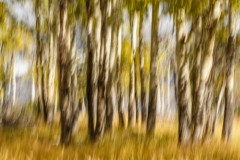Study In Abstract No. 187, Yellowstone NP