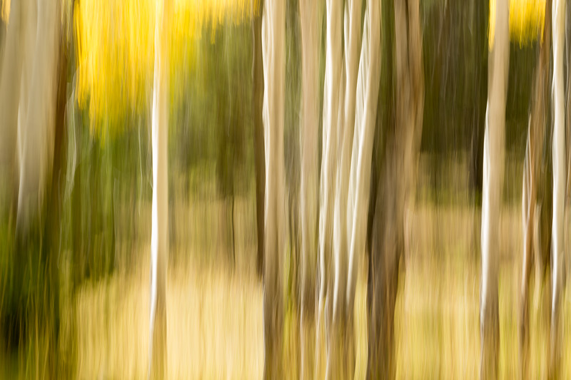 Study In Abstract No. 126, Yellowstone NP