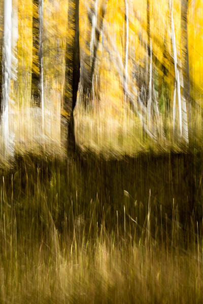 Study In Abstract No. 48, Yellowstone NP