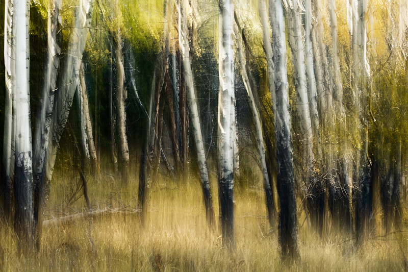 Study In Abstract No. 180, Yellowstone NP