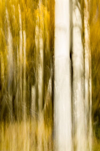 Study In Abstract No. 61, Yellowstone NP