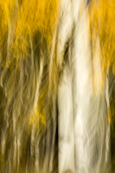 Study In Abstract No. 57, Yellowstone NP