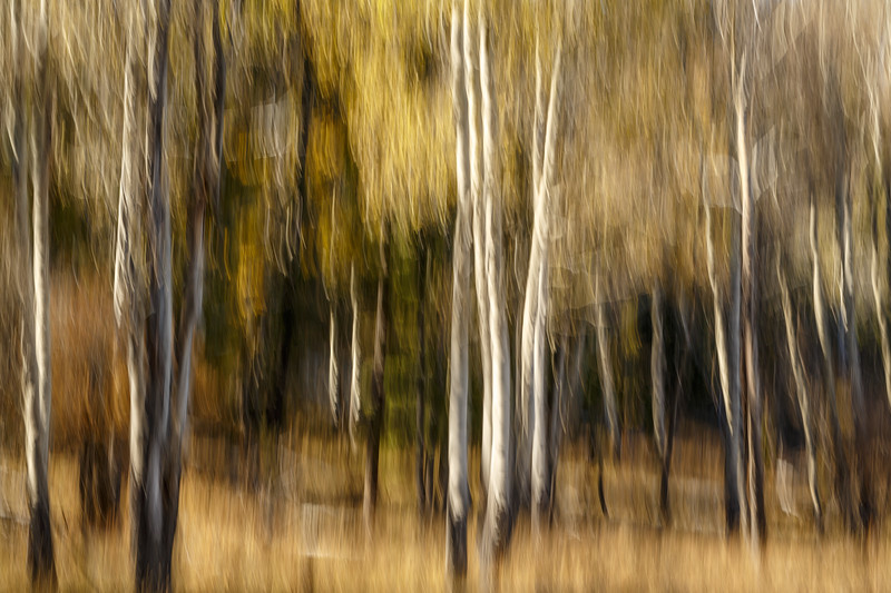 Study In Abstract No. 190, Yellowstone NP