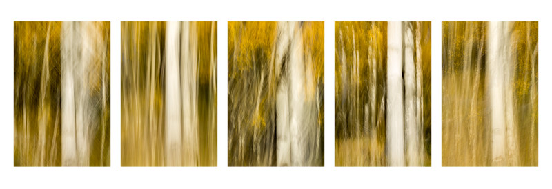 Study In Abstract Nos. 57, 58, 59, 60, 61, YNP (Composite)