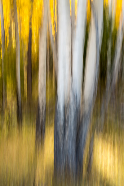 Study In Abstract No. 178, Yellowstone NP