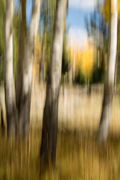 Study In Abstract No. 129, Yellowstone NP