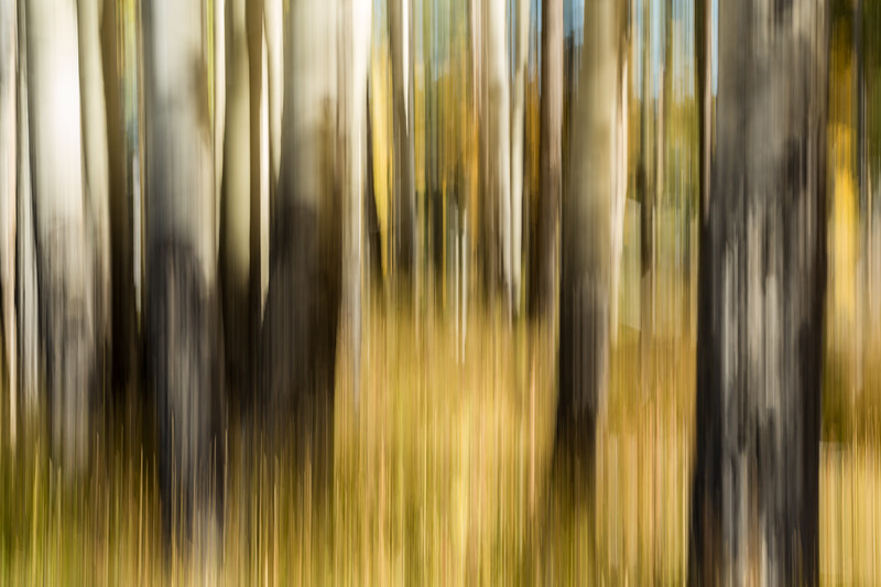 Study In Abstract No. 71, Yellowstone NP