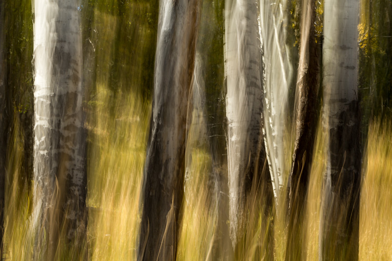 Study In Abstract No. 150, Yellowstone NP