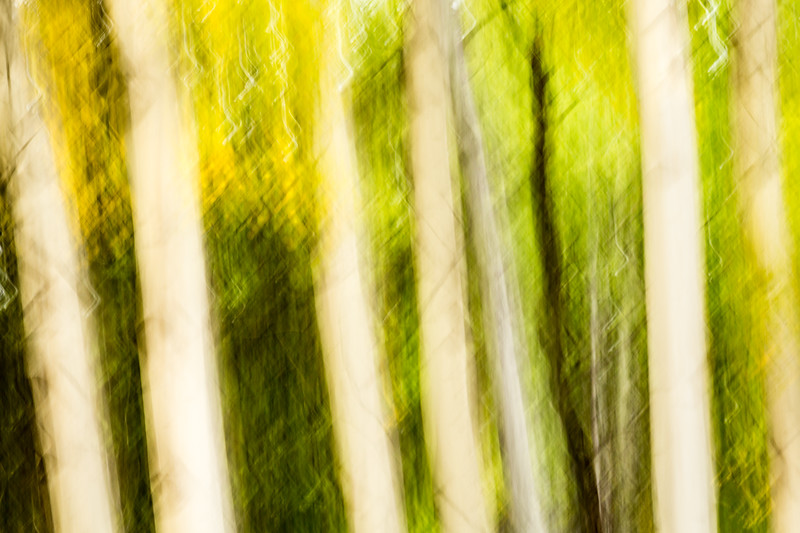 Study In Abstract No. 26, Yellowstone NP