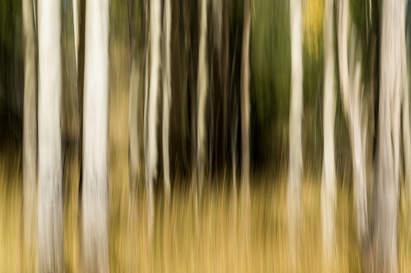 Study In Abstract No. 363, Yellowstone NP
