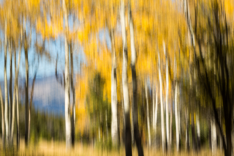 Study In Abstract No. 131, Yellowstone NP