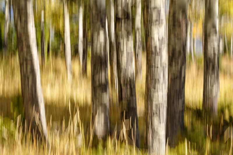 Study In Abstract No. 185, Yellowstone NP