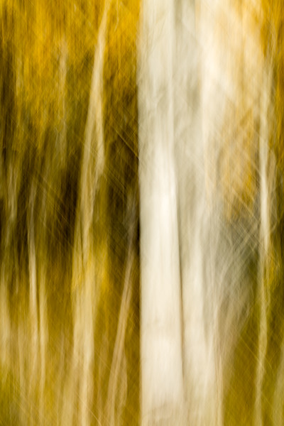 Study In Abstract No. 58, Yellowstone NP