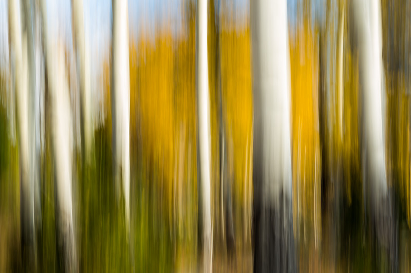 Study In Abstract No. 198, Yellowstone NP