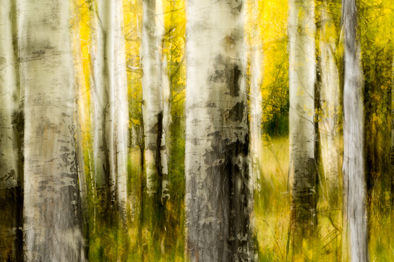 Study In Abstract No. 36, Yellowstone NP