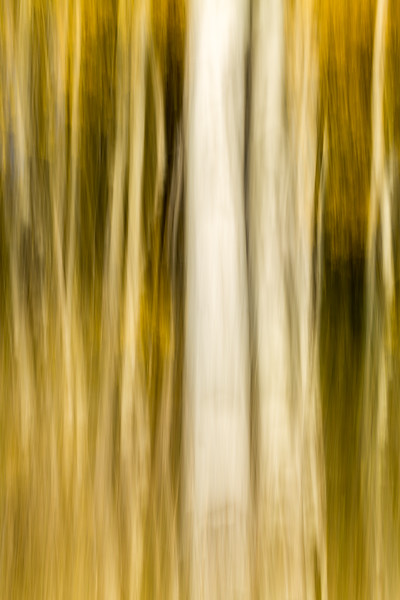 Study In Abstract No. 60, Yellowstone NP