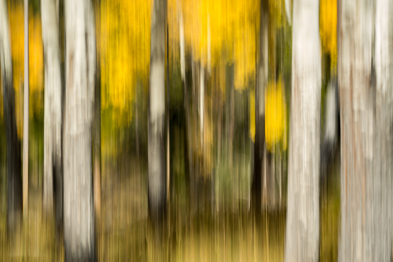 Study In Abstract No. 234, Yellowstone NP