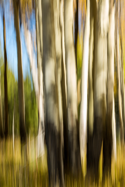 Study In Abstract No. 69, Yellowstone NP